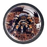 Araña de tarántula de rodilla roja mexicana, pomos de resina...