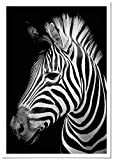 Panorama Poster con Paspartú Cebra 50x70cm - Impreso en Papel 250gr - Poster de Animales - Cuadros Decorativos de Animales - Cuadros Salón Modernos - Cuadros Dormitorio