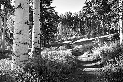 BILD PAPEL MOON - Papel pintado fotográfico (impresión digital, incluye pegamento, varios tamaños), diseño de bosque de abedul, color blanco y negro