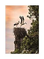 Photo Crane Birds Nest Trees Sky Wall Art Print 写真鳥木壁