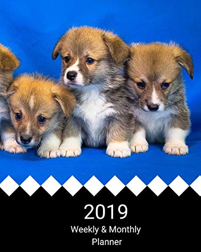 2019 Weekly and Monthly Planner: Welsh Corgi Puppies Daily Organizer -To Do -Calendar in Review/Monthly Calendar –Notes Volume 13