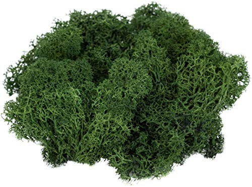 Reindeer Moss Preserved | Forest Green | 4oz of Colorful Spring Green Reindeer Moss for Potted Plants, Floral Terrariums and Crafts | Plus Free Nautical eBook by Joseph Rains