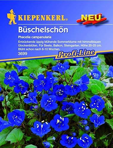 ScoutSeed Kiepenkerl - Bueschelschoen Phacelia campanularia 3699 himmelblau Sommerblume