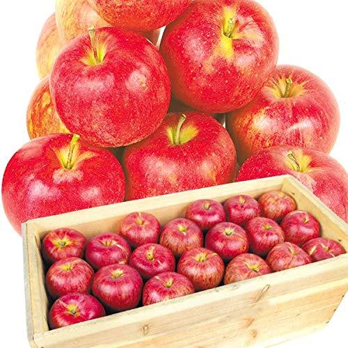 国華園 食品 青森産 ジョナゴールド 約20�s1箱 木箱 りんご