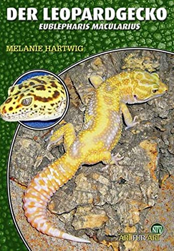 Der Leopardgecko - Eublepharis macularius