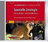 Spezielle Zoologie. Teil 2: Wirbel- oder Schädeltiere: Alle Abbildungen Des Buches