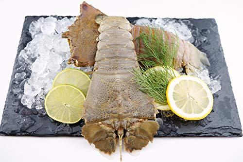 Bärenkrebs - Mediterranean Slipper Lobster / roh / Wildfang / Westlicher Pazifiischer Ozean / 3 Stück / Gewicht (400 - 450g)