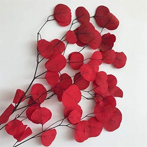 Bloem Real Gedroogde Natural Fresh blijvend Eucalyptus Takken, Bewaarde Round Leaves Flowers, Apple eucalyptus, DIY home decoratie Crème (Color : Red)