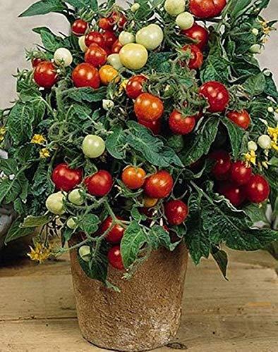 VISTARIC 30pcs Köstliches Non-GMO...