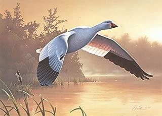 Daniel Smith - Lesser Snow Goose 1988 Federal Duck Stamp Print