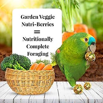 LAFEBER'S Garden Veggie Nutri-Berries Nourriture pour Oiseaux pour perroquets, fabriquée avec des ingrédients sans OGM et de qualité Humaine, 283,5 g
