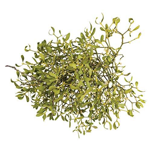 Pflanzen Kölle Mistelkrone Natur groß - ca. 40/50 cm - kugelige Weihnachtspflanze - Wird traditionellerweise als Türschmuck verwendet - Gilt als Liebes-, Glücks- und Schutzsymbol