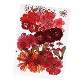 Sharplace 36/37/38/39/42 Piezas Naturales Flores Secas Prensadas Hojas Prensadas para Artesanía Resina Epoxi Colgante Joyería Accesorios, Multicolores - Rojo
