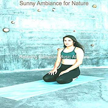 Sunny Ambiance for Nature