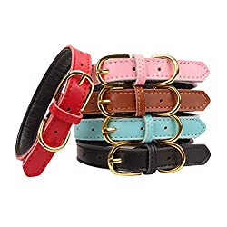 dog leather collar