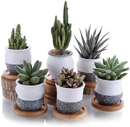 T4U 6cm Cerámico Mini Estilo Coreano Serie de Nieve Suculento Maceta de Cactus Flor Macetas Envase Plantas con Bandejas de Bambú Todo Color Conjunto de 6