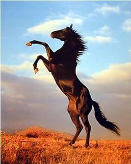 Wild Black Stallion Horse Rearing Animal Bedroom Decor Art Print Poster (16x20)