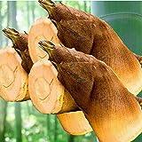【九州/四国産】朝堀り 新たけのこ 大きさおまかせ 約8~10kg