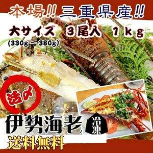 伊勢海老 活〆冷凍(加熱用) 大きめサイズ 1kg 3尾入  [伊勢海老] (活〆冷凍)