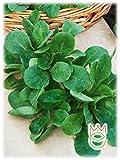 Valeriana Verte de Cambrai a Seme Piccolo Valerianella locusta Semi Semenze Ortaggi Orto Giardino
