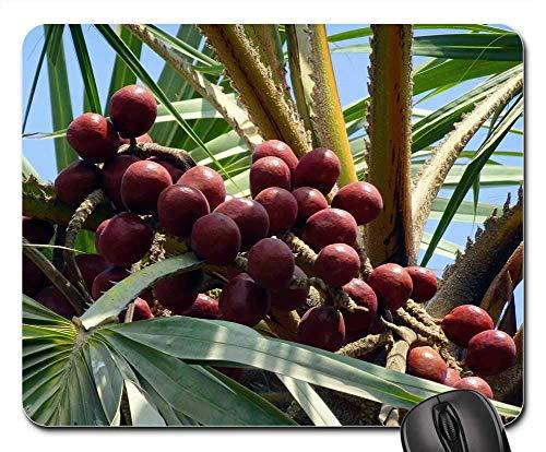 25X30cm Maus Matte Mauspad - Palmenfrucht Hokka Baum Hyphen Thebaica Doum Palme 1