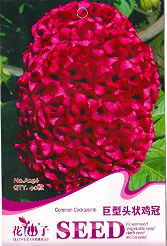Semillas Celosia cristata gigante roja Común Cresta de gallo flor anual, paquete original, 40 semillas / paquete A256