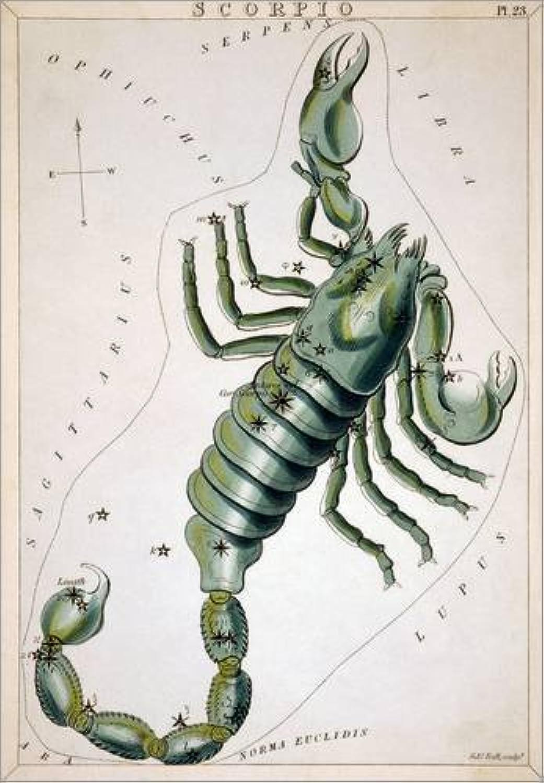 Cuadro de PVC 60 x 80 cm  Constellation  Scorpio. de Sidney Hall Granger Collection
