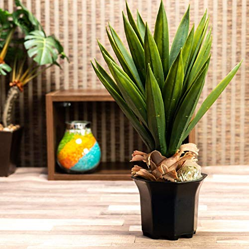 Planta Box Wood Artificial de Etna Verde 51cm