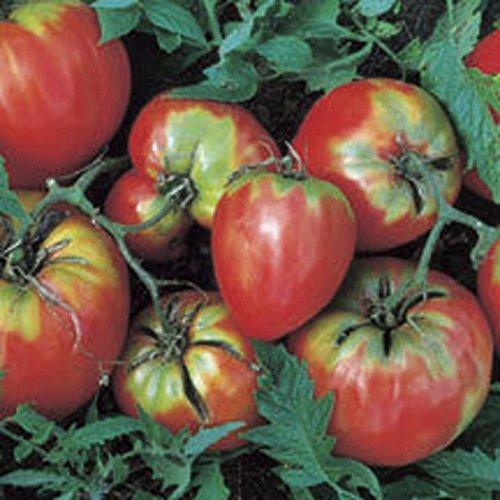 Heirloom OP Oxheart tomate 100 graines Coeur de boeuf, grande intensité élevée, quelques graines