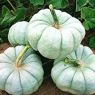 DIY Pumpkin - Sale 10 Pcs Rare Blue Pumpkin Bonsai Vegetables in Home Fruit Vegetable DIY Plant Sementes for