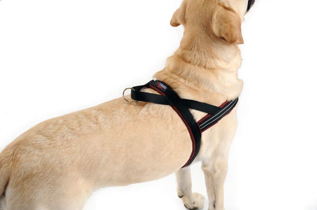 Small Kelly Green PetPDC ComfortFlex Sport Harness