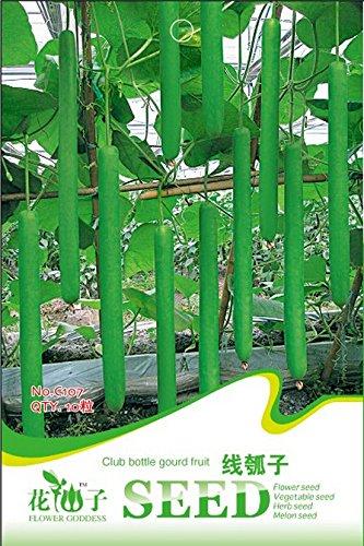 Organic Long Green Club de Bouteille Gourd Semences Potagères, emballage d'origine, 10 Graines / Pack, Grands légumes Tasty C107