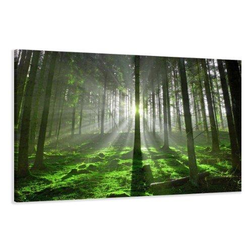 Visario Leinwandbilder 5130 Bild auf Leinwand Wald, 120 x 80 cm