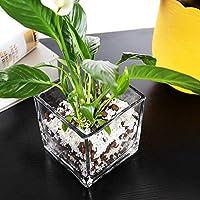 GYCモダンシンプルシックガラスクリアフラワーポット屋内装飾多肉植物ポットデスクトップ装飾水文化花水植物花瓶四角いシリンダーDIYオフィスプランター(サイズ:S)