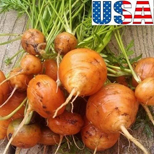 500 Samen: USA Parisan (kein Stück) Karotte 100-1000 Samen Heirloom Non GMO