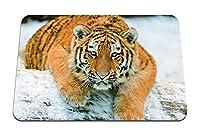 26cmx21cm マウスパッド (虎カブ捕食者雪横になっています) パターンカスタムの マウスパッド