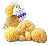 Real Natural Sea Sponges Multipack - 5pc Spa Gift Set in Premium Bag, Kind on Skin, For Bath Shower Facial Cleansing, Pamper Moms Brides Girlfriends & Teens by Constantia Beauty