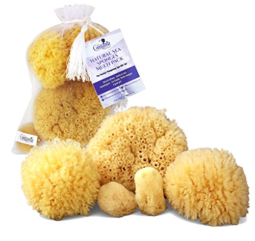 Real Natural Sea Sponges Multipack - 5pc Spa Gift Set in Premium Bag, Kind on Skin, for Bath Shower Facial Cleansing, Eco Friendly, Pamper Moms Brides...