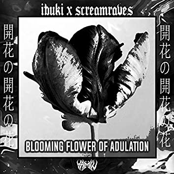 Blooming Flower of Adulation