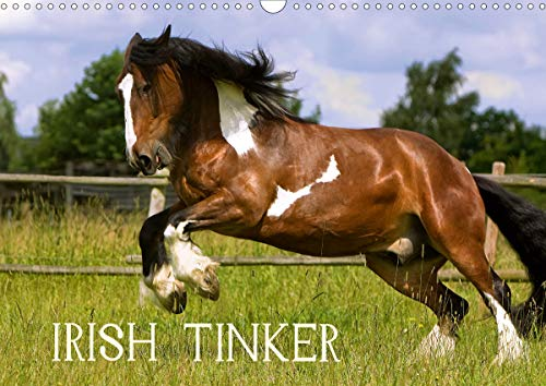 Irish Tinker (Wandkalender 2021 DIN A3 quer)
