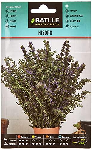Semillas Aromáticas - Hisopo - Batlle