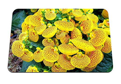 22cmx18cm マウスパッド (カルセオラリア花黄色明るい斑点) パターンカスタムの マウスパッド