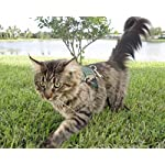Best Cat Harness and leash for your cat or kitten