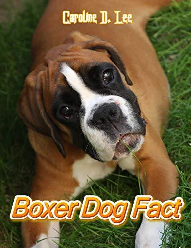 Boxer dog Fact: Animal fact for girl age 1-10 Animal fact for boy age 1-10 boxer dog on fact