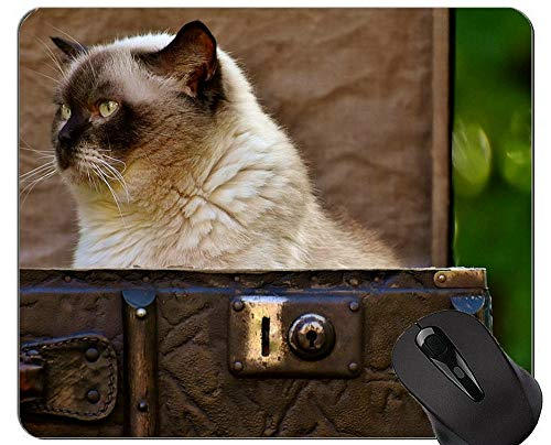 Yanteng Alfombrillas para ratón, Alfombrilla de Gato Gris de Pelo Corto para Gato, Antideslizante, Alfombrilla para Gato con Borde Cosido