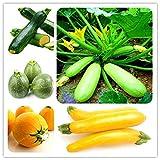 Edenseeds 30 Pcs Organic Summer Squash Zucchini Seeds Vegetable Plant...