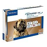 Virbac 104825144 Effipro'Duo Cani 4Pip XLarge...