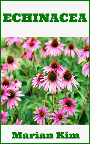 Echinacea Echinacea Purpurea Echinacea Medicine