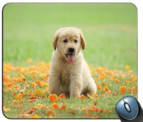 Mauspad Gaming Maus Matte Gel-Gummi für PC, Niedliche Labrador-Welpen-Mausunterlage-Auflage - verfolgen Sie Hunde Goldener Apportierhund PC Computer