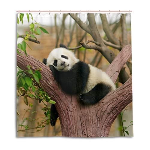 CPYang Duschvorhänge, süßes Tier-Panda, schlafender Baum, wasserdicht, schimmelresistent, Badevorhang, Badezimmer, Wohndeko, 168 x 182 cm, mit 12 Haken